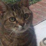 Cat Binx