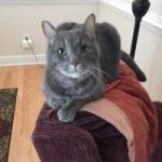 cat Bogger