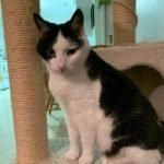 Cat McCarthy