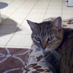 cat Clair
