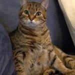 Cat Leo
