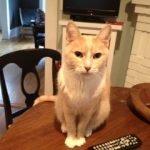 Cat Oscar