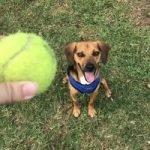 Sarah P's dog Sydney