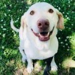 Dog Zoey