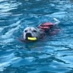Dog Dexter swimming