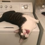 cat on washing machine
