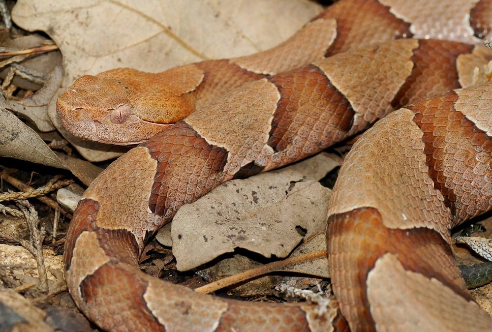 Dogs, Cats, and Copperheads