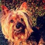Dog Muffy