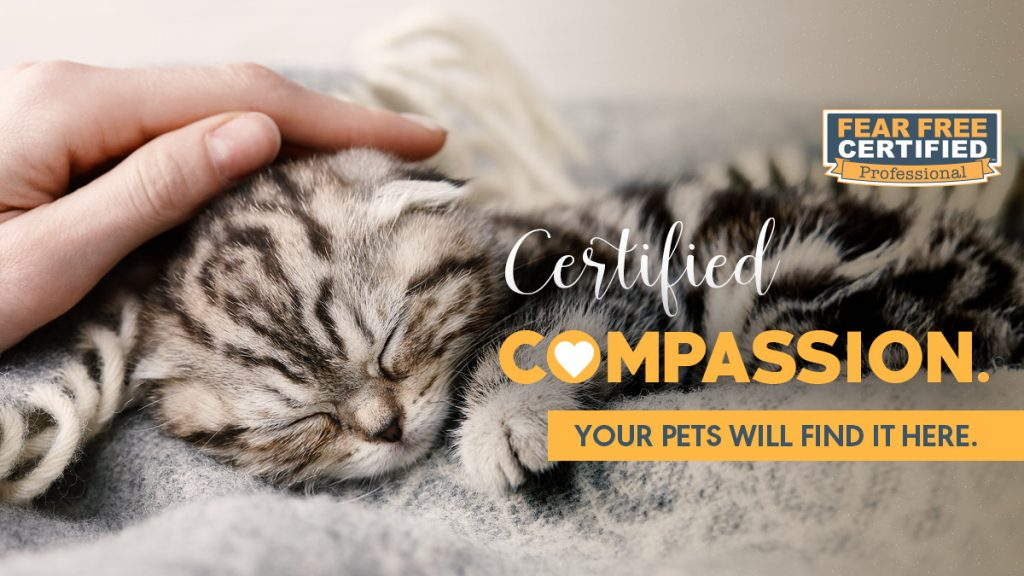 Fear Free Certified Compassion Cat