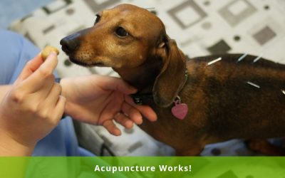 DID YOU KNOW? Synergy Integrative Veterinary Clinic