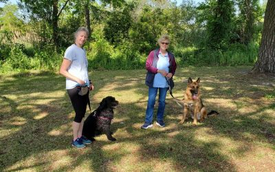 Tips for Walking a Reactive Dog