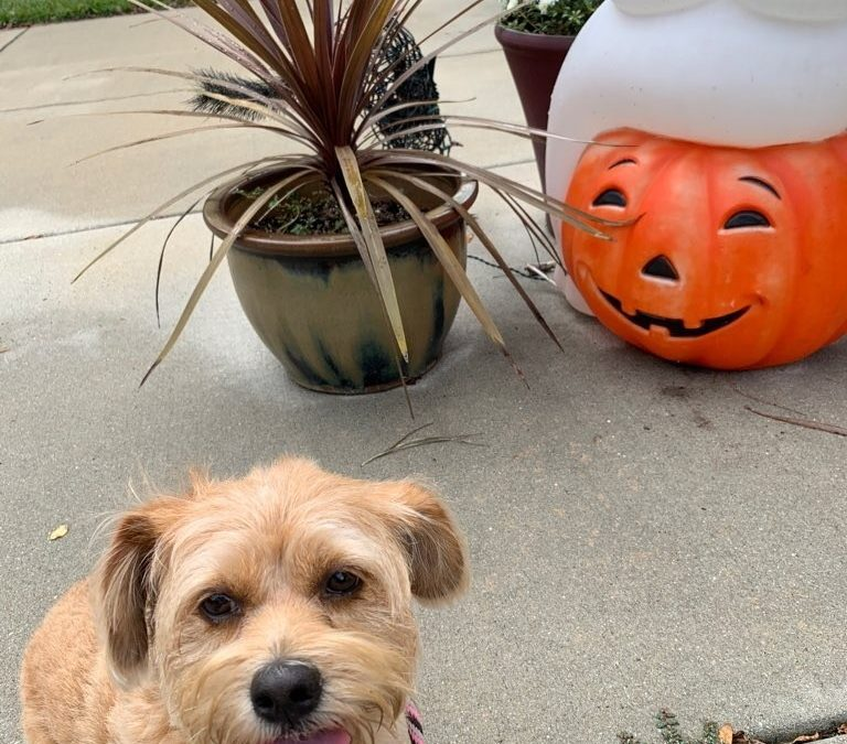 Halloween Tips for Your Pets!